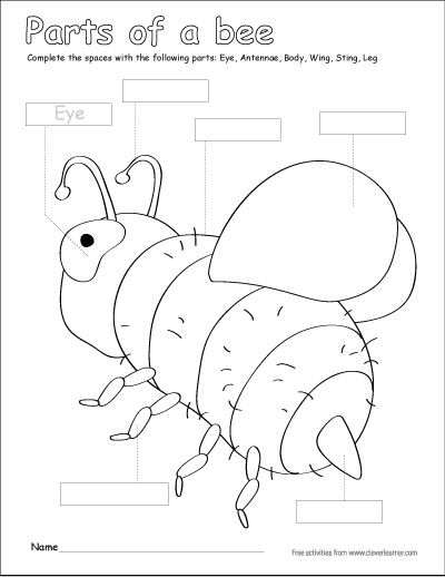 Parts of a bumble bee, free printable kids activity http
