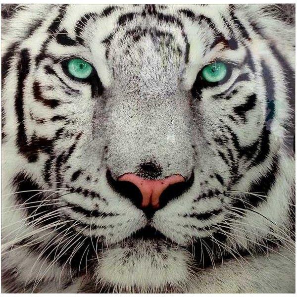 Tableau En Verre Le Tigre Blanc Tigre Blanc Tigre Photographie Animaux