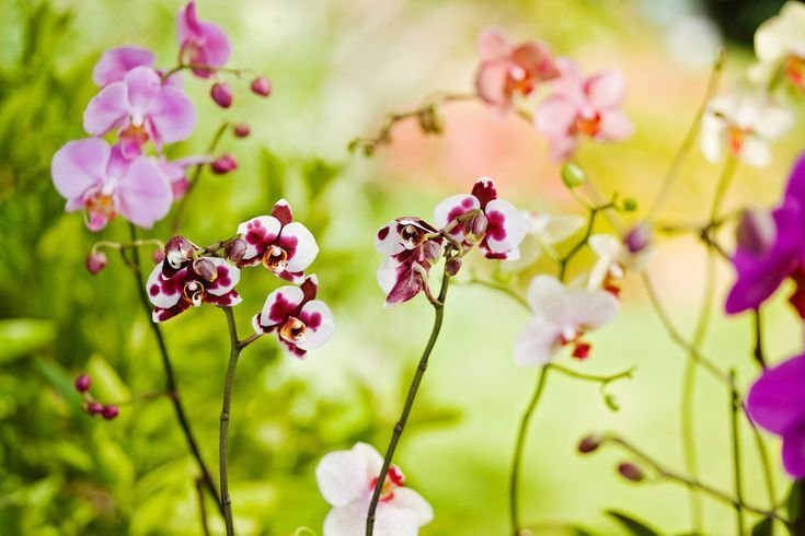 Top five mistakes when growing orchids