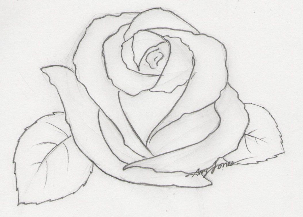 Find This Pin And More On Drawing Roses