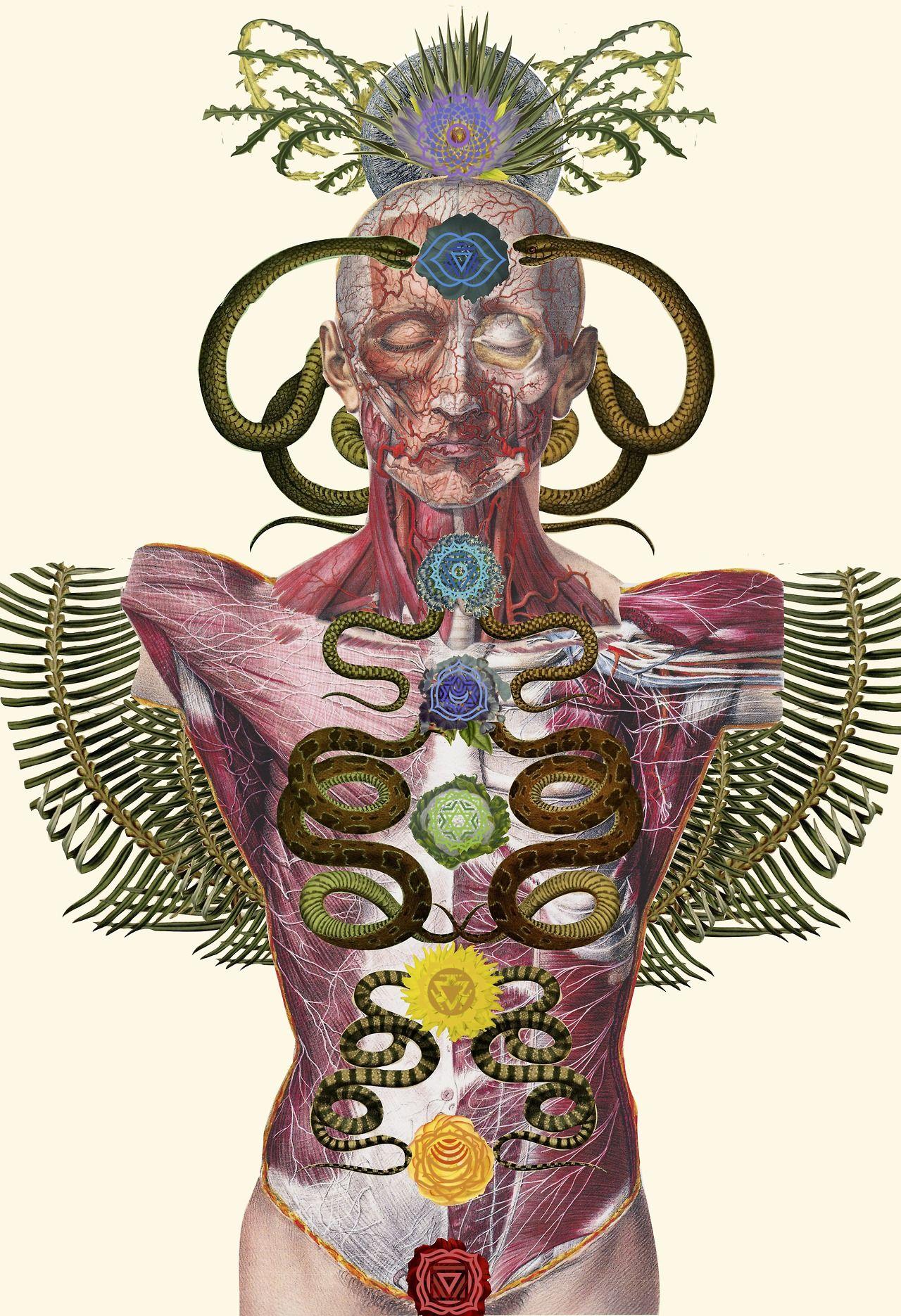 Anatomia Floral nas colagens de Travis Bedel en 2018 | inside out ...