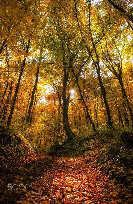 The Autumn Forest Null Autumn Forest Autumn Scenery Autumn Photography
