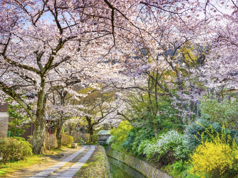 The Best Time To Visit Japan A Month By Month Guide Visit Japan Amazing Destinations World