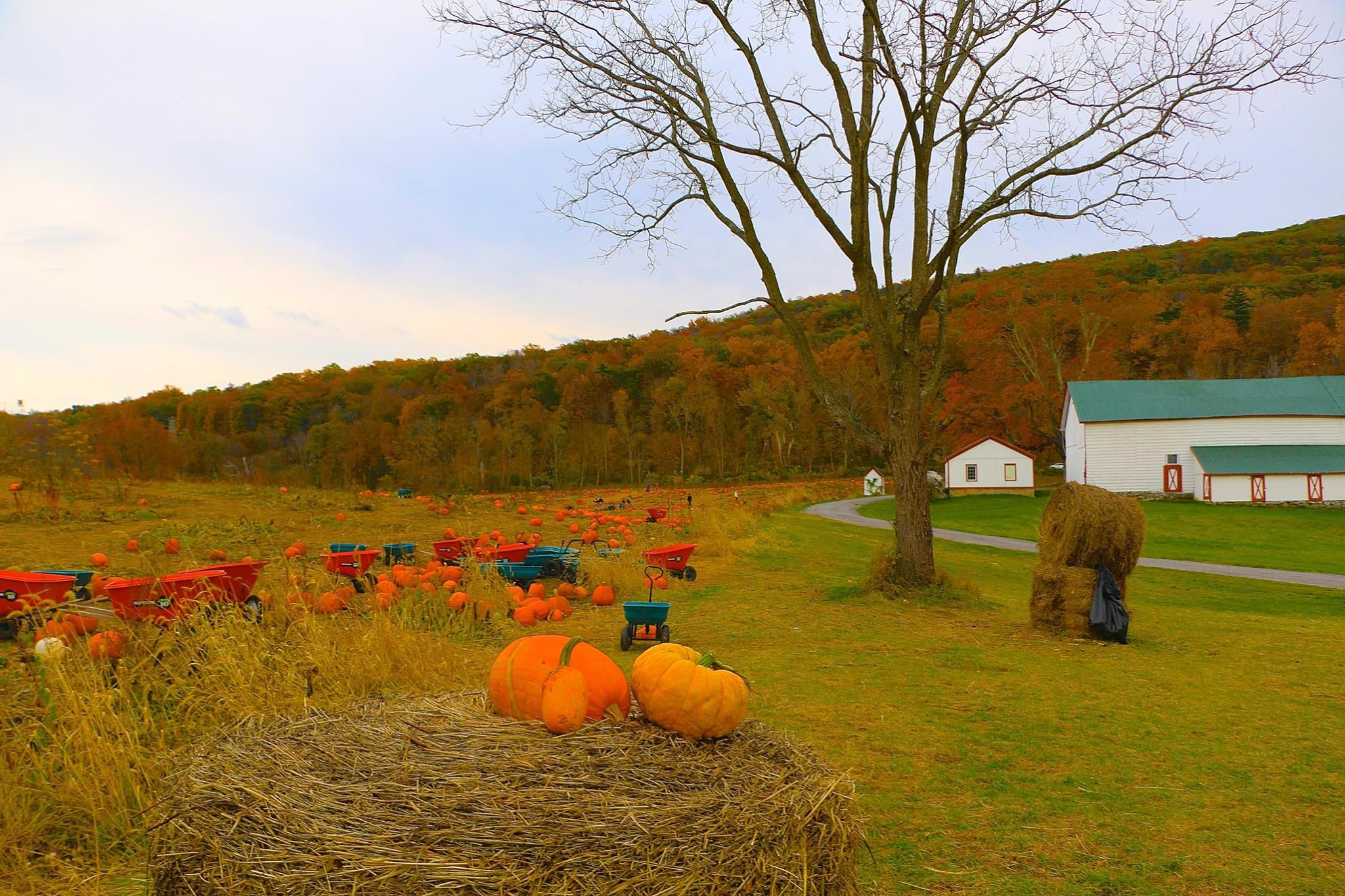 The 28 Best Pumpkin Farms to Visit This Fall | I Love Fall
