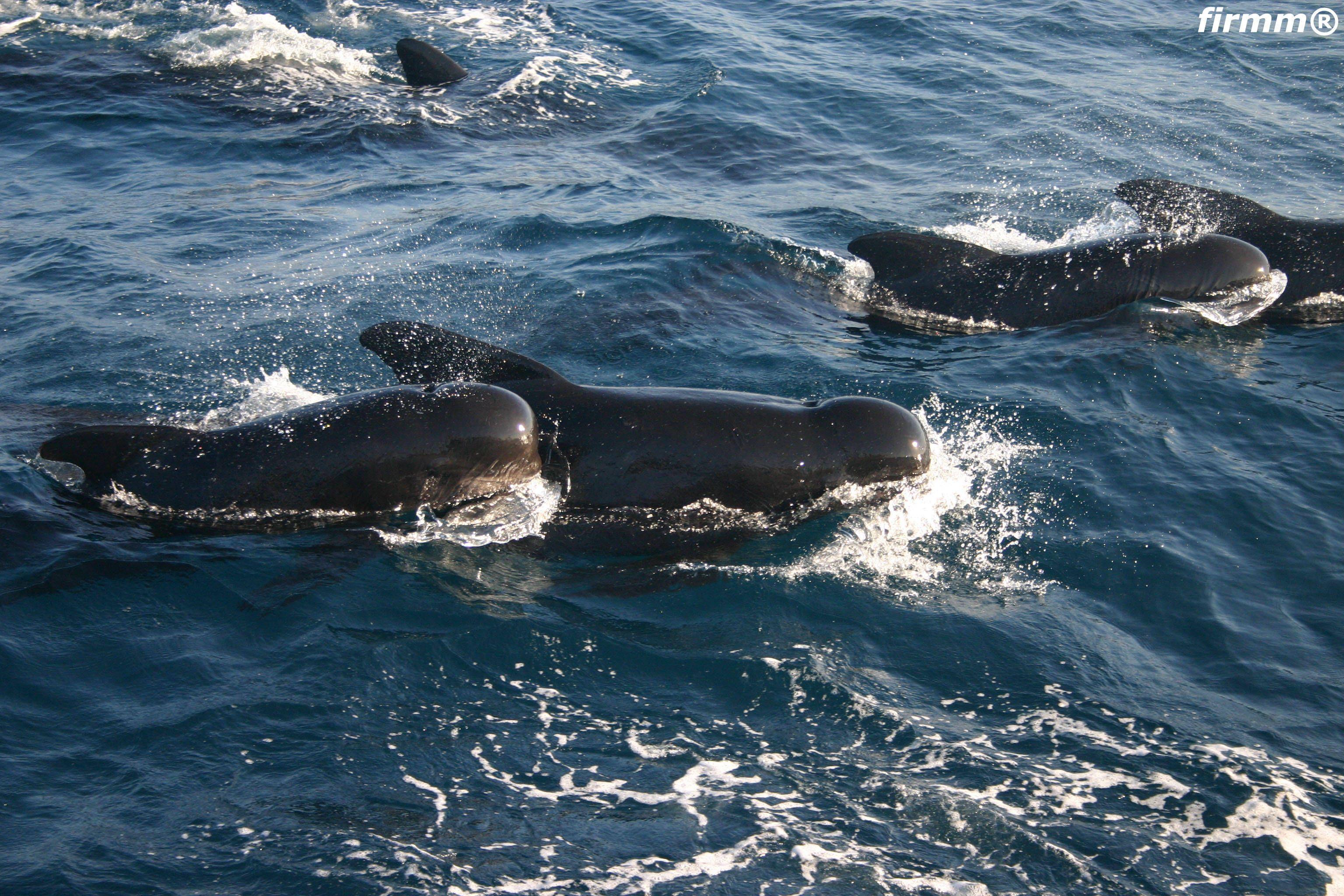 http://www.bangngangan.com/images/whales-dolphins-tarifa_1173202.jpg