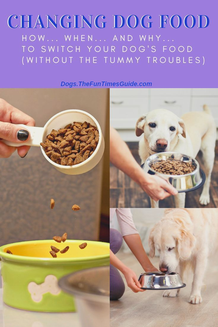 Changing dog food how to transition your dog to a new
