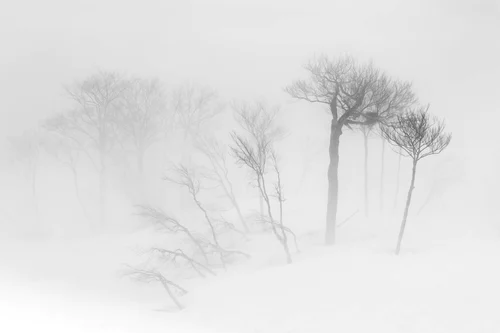 Black White Nature Pictures Download Free Images On Unsplash Storm Pictures Nature Pictures Storm Images