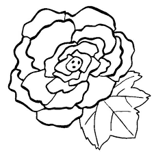 Image Result For Draw Begonia Step By Step Flower Coloring Pages Flower Art Coloring Pages