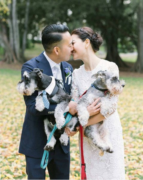 Sweet Schnauzers - The Cutest Wedding Dogs on Instagram - Photos