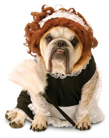 Yes! Zelda French Maid Pet Costume | Halloween | Pinterest ...