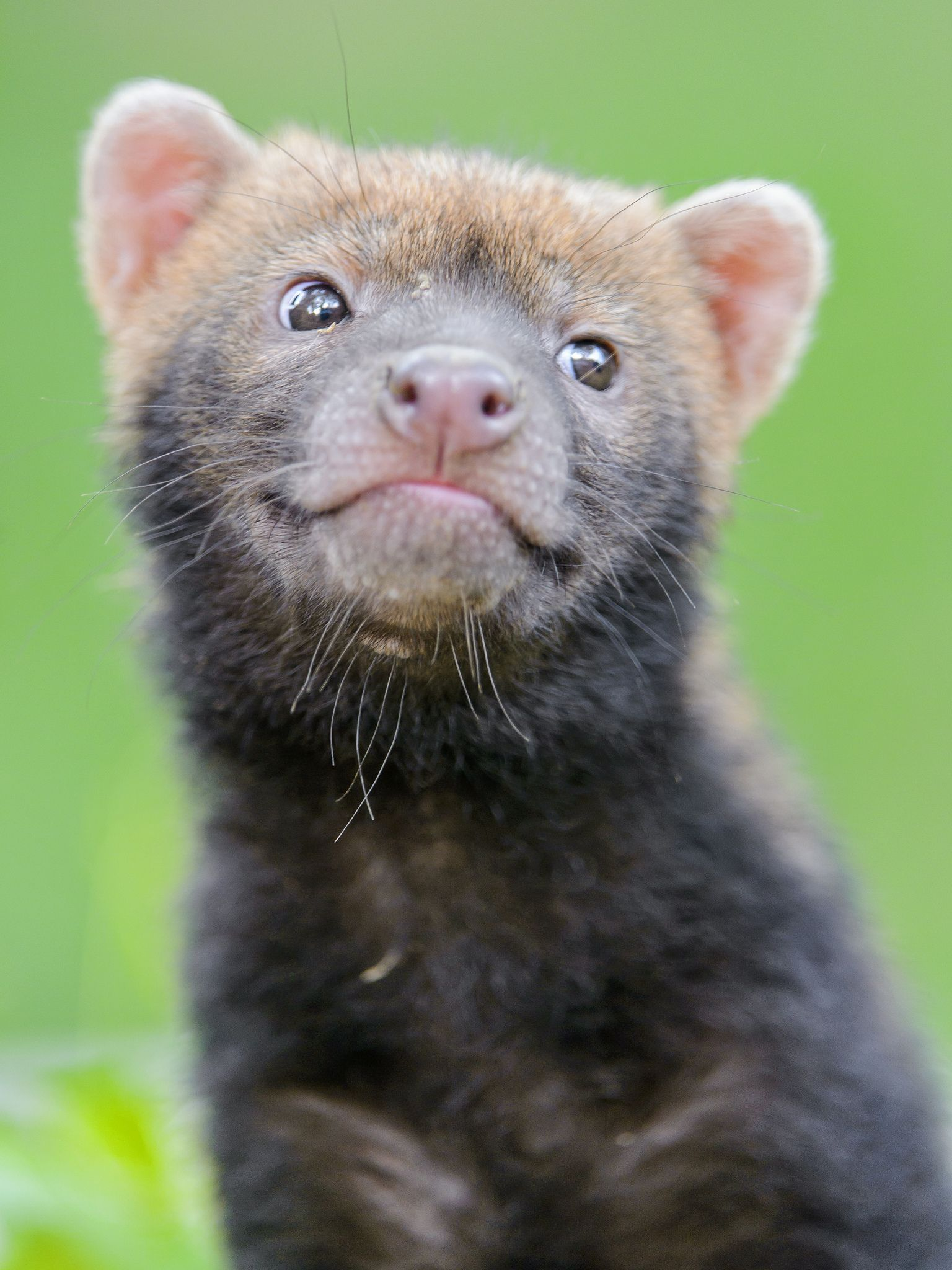 Cute cheeky smiling bush dog baby II | Baby dogs, Wild ...