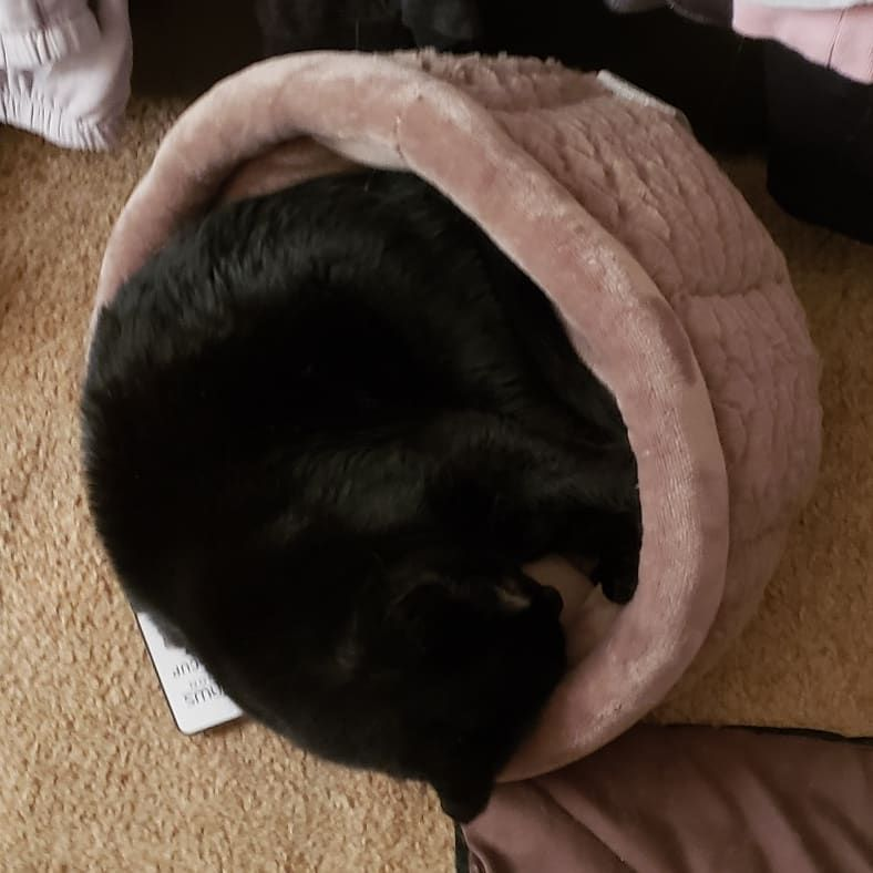 Ummmok babycat i guess thats one way to use the bed