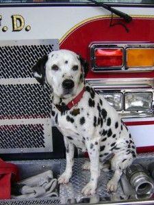 Firehouse Mascot Cute Puppies Furry Friend Dog Cat