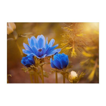 Blue Anemone Flower Blossoms Acrylic Print Zazzle Com Flower Wallpaper Flowers Morning Flowers