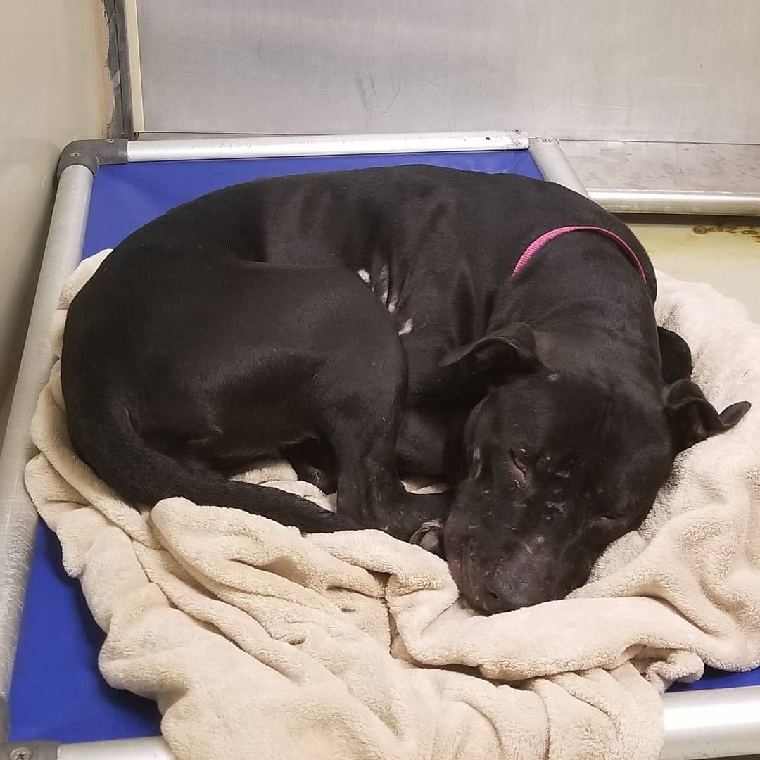 Acct Urgents Volunteer Run On Instagram Medically Urgent Dog At Acct Philly In Need Of Short Term Or Long Term Foster A Severe Doggy Cold Is G With Images Pet Adoption