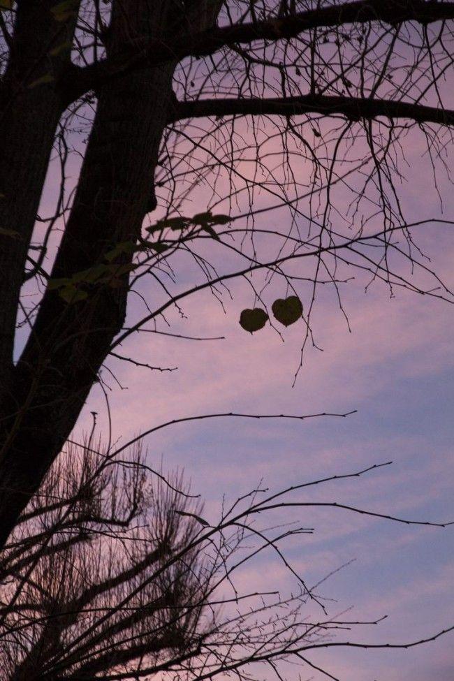 Appeso a un filo, delicato, etereo, una folata di vento e vola giù. Ma poi, l'amore, rinasce sempre. #appeso