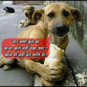 Funny Animals Hindi Animals Funny Animals Animal Planet