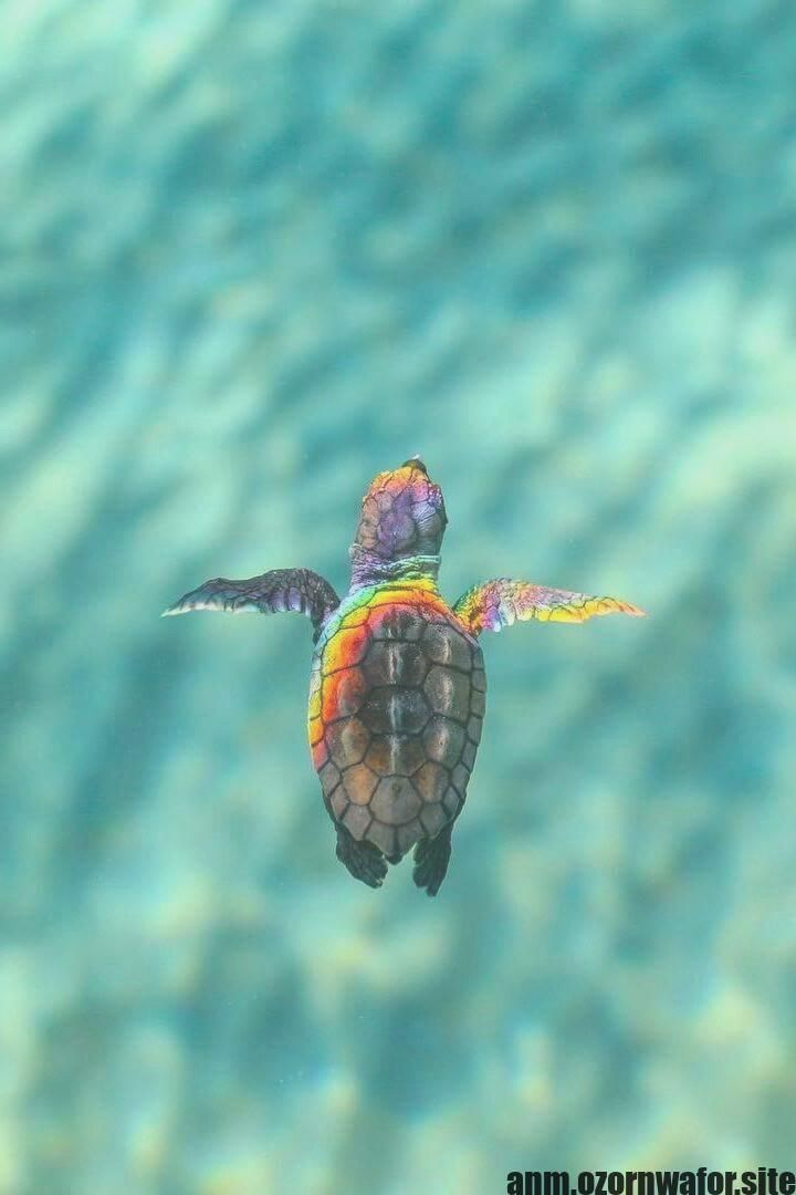 Latest Snap Shots Turtles Pet Baby Popular Children Have A All Natural Fascination With The Globe All Over Them Thus It Is No Wonder Why Turtles Are Ge Baby