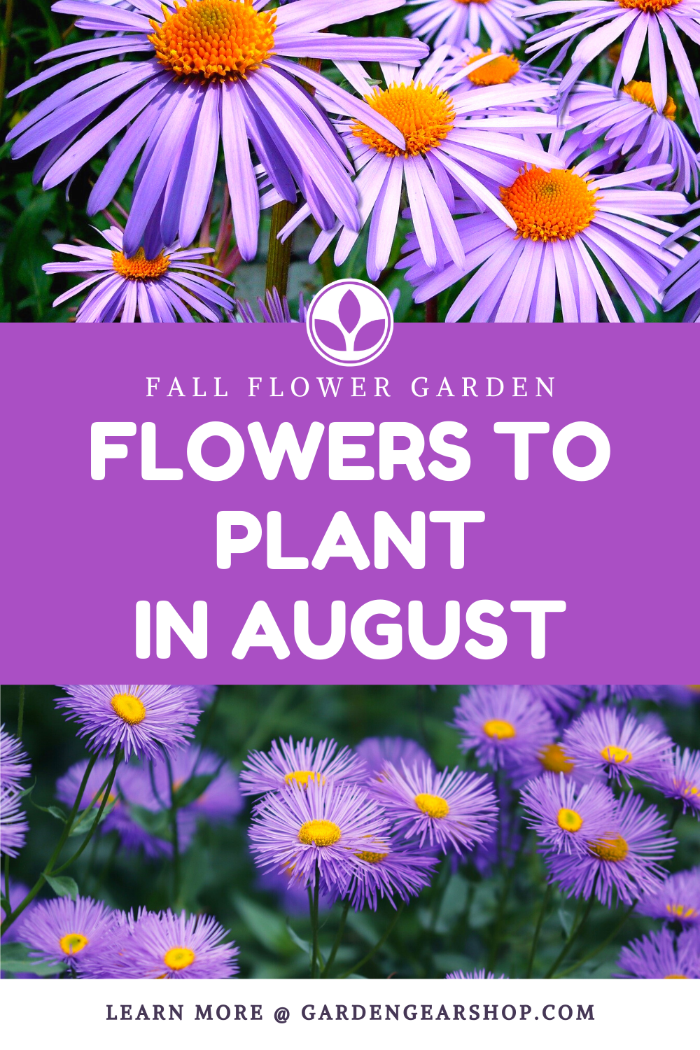 Flowers To Plant In August In 2020 Planting Flowers Plants Fall Flowers Garden