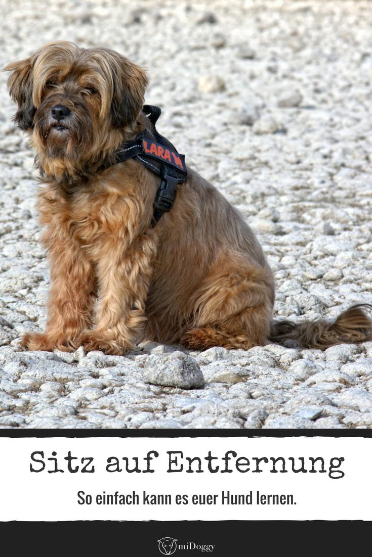Tabus Trick Kiste Sitz Auf Entfernung Hundeerziehung Hunde