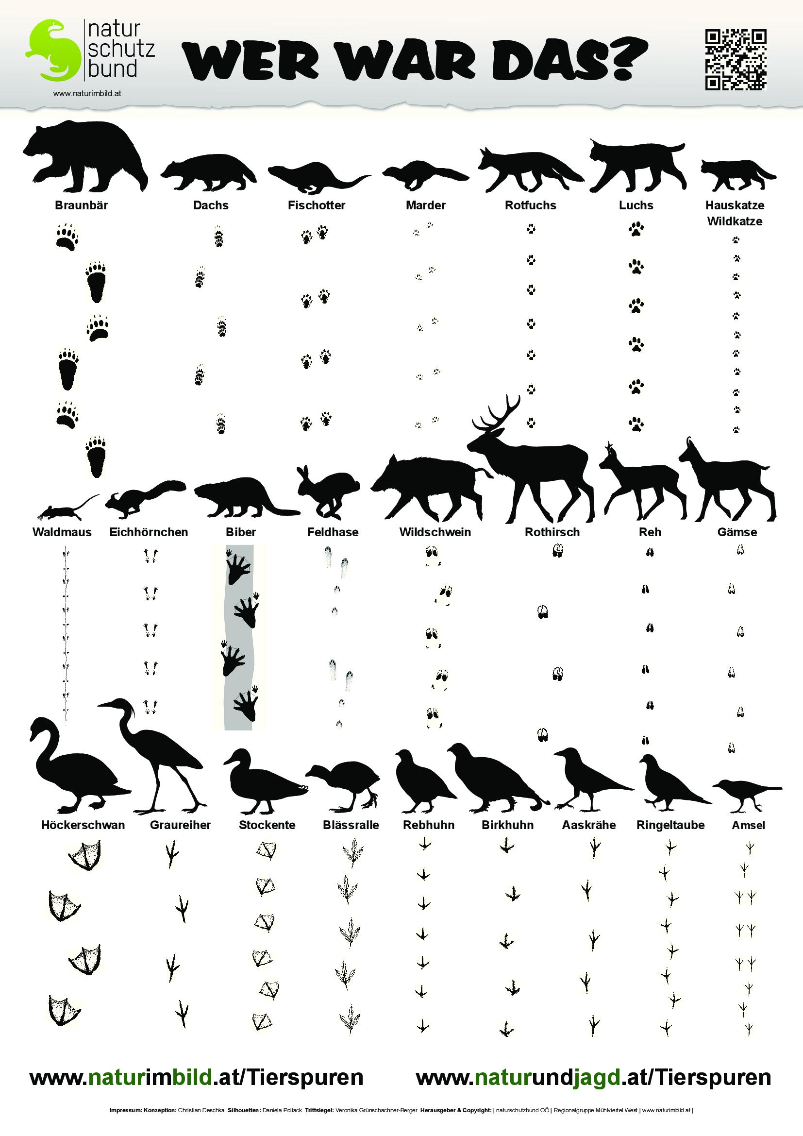 tierspurenbestimmungsblatt spuren von 25 heimischen wildtieren. Black Bedroom Furniture Sets. Home Design Ideas