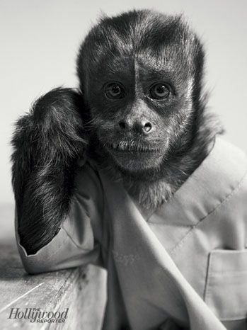 The 100 Fresh Faces Of Fall Tv Monkeys Funny Monkey Pictures