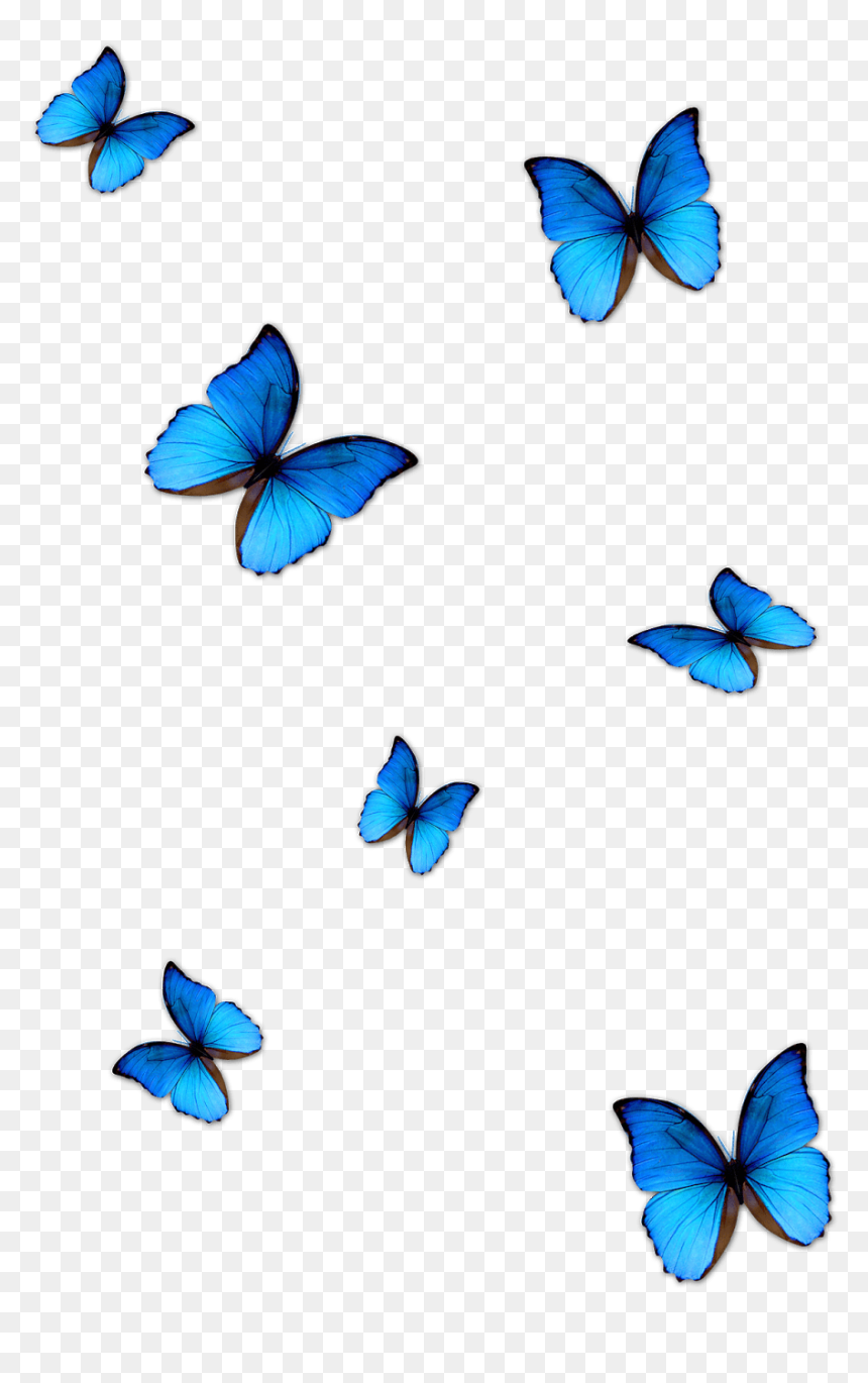 Transparent Background Butterfly Png For Editing
