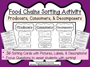 food chains sorting activity game about producers consumers decomposer ccss science. Black Bedroom Furniture Sets. Home Design Ideas