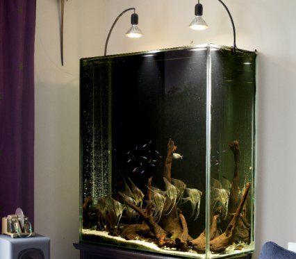 Altum Angelfish Aquarium Altum Angelfish Aquarium