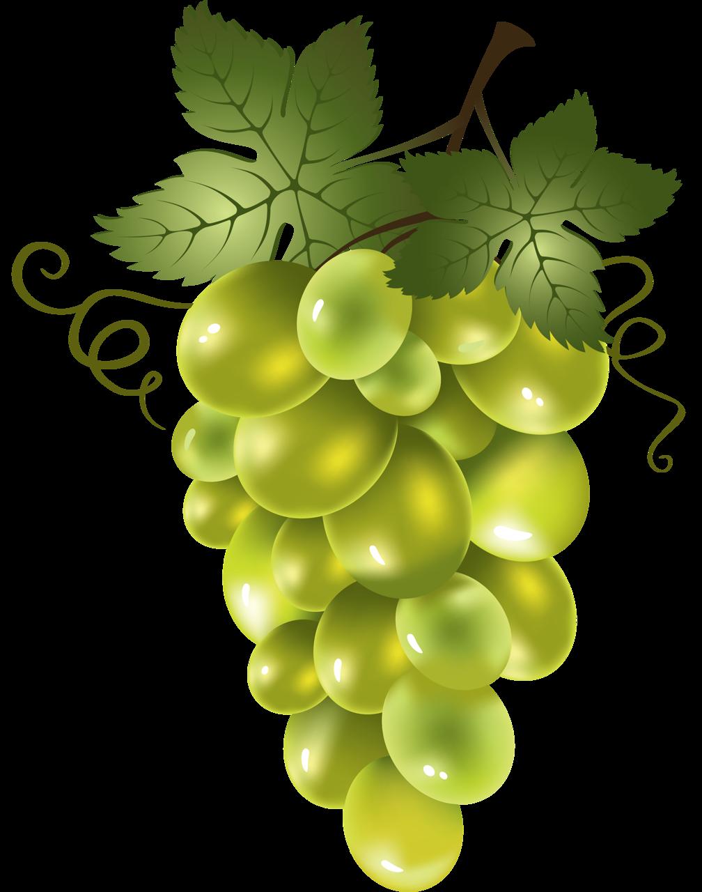 держал картинка виноградной ветки может