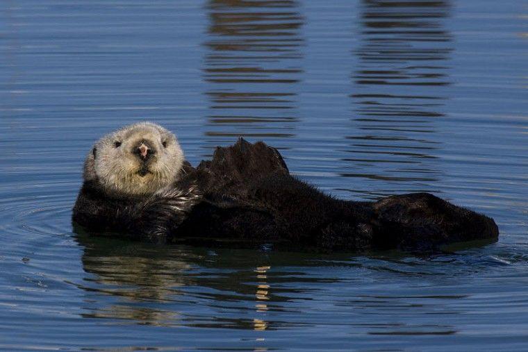 The girls school mascot are Sea Otters. Love love love!!!!!