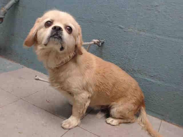 Lancaster Ca Animal Shelter Dog My Id A5077265 Animals
