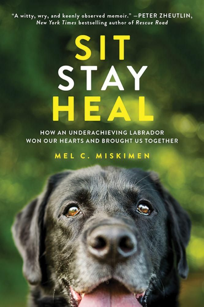 Sit Stay Heal How An Underachieving Labrador Won Our Hearts