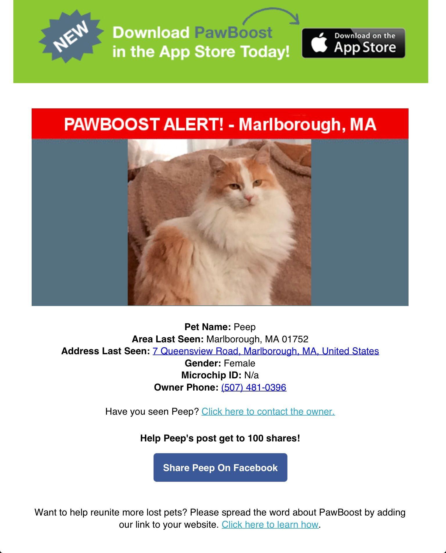 Lost Female Cat Named Peep Marlborough Ma Pet Names Cat Names Marlborough