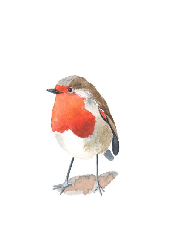 3673a7973fa3f Fat Bird   Bird & Panda   Watercolor paintings, Watercolor bird ...
