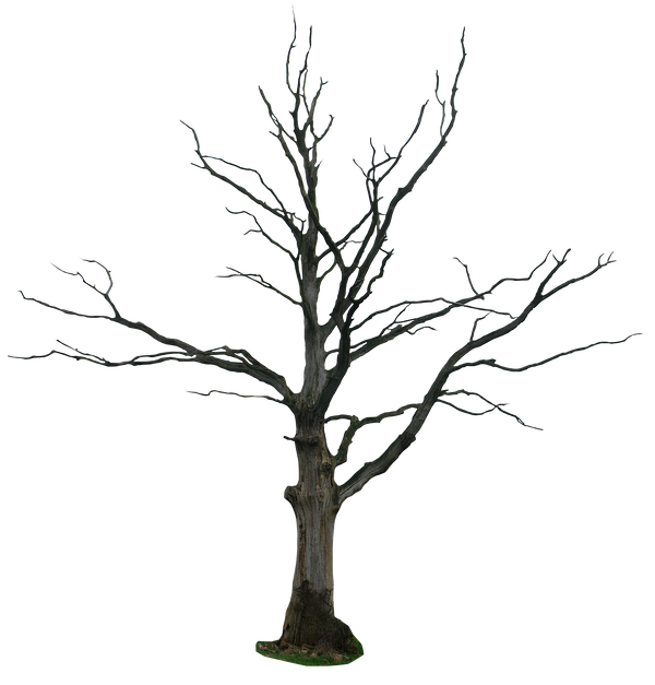 Https Www Deviantart Com Gd08 Art Dead Tree Png 211271091 Tree Drawing Black And White Art Drawing Winter Trees