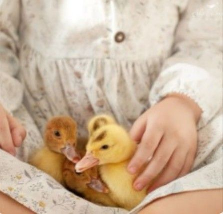 pindaydreamer on just ducky  fluffy animals cute animals