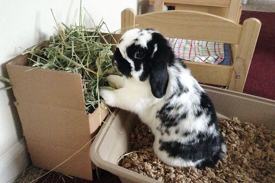 Diy Hay Rack Litter Box Bunny Bunny Cages Rabbit Toys