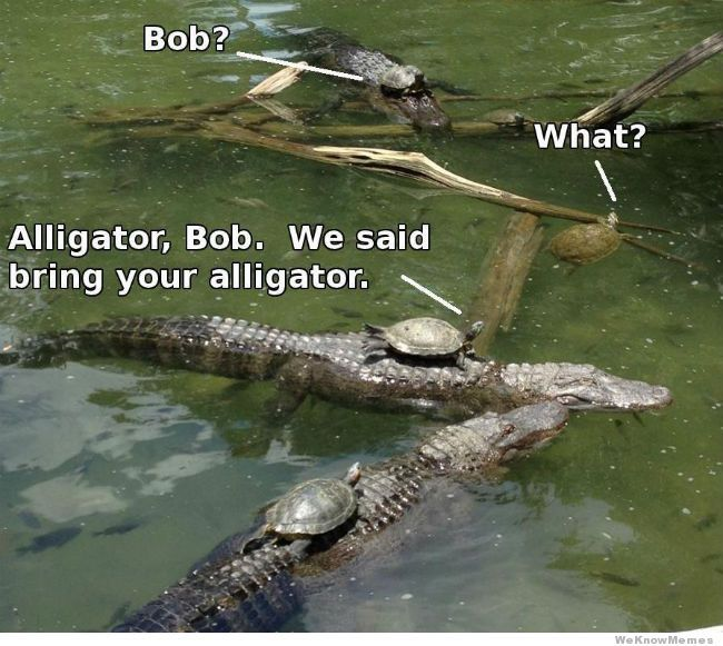 Bob bring your alligator. I don't know why this cracks me up.