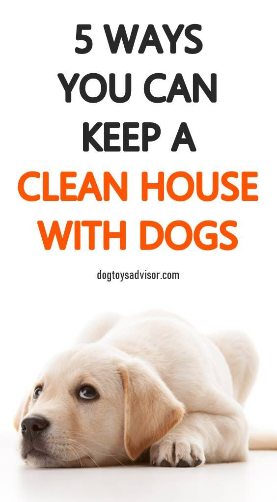 Does Your Dog Occasionally Pee Inside The House Have You Tried