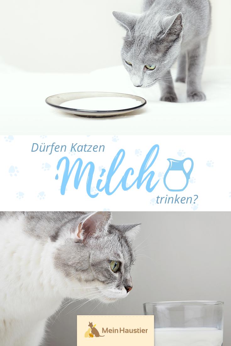 Durfen Katzen Milch Trinken Ist Katzenmilch Wirklich Gesund