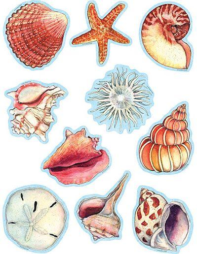 Coleccion De Imagenes A Color Conchas De Mar Dibujo Dibujo Del Mar Dibujos