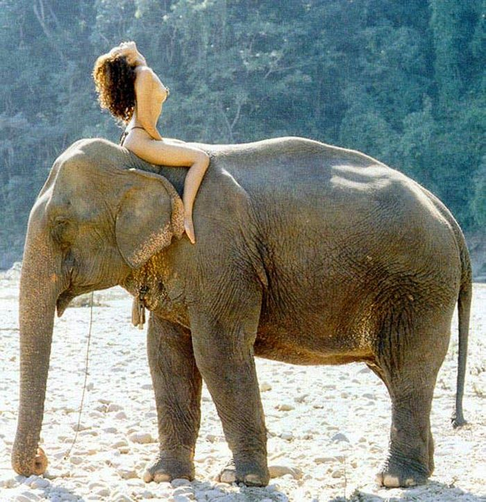 girl-having-sex-with-and-elephant-videos