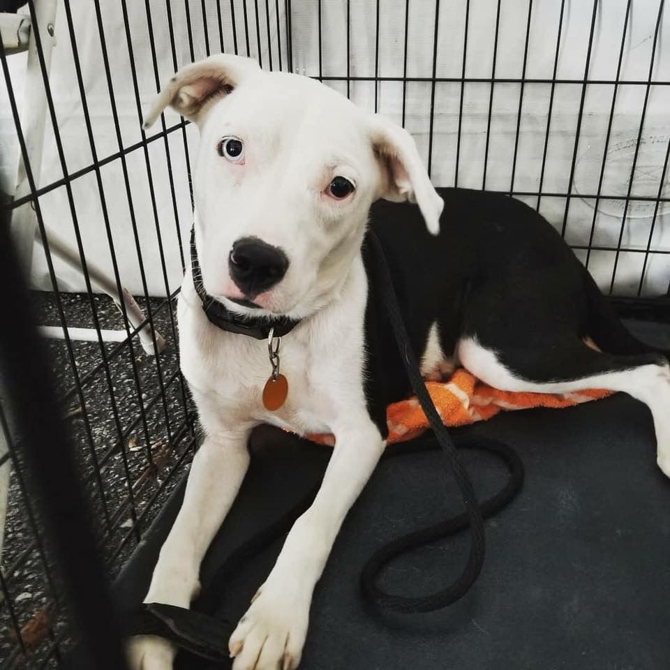 Adopt Annabelle On Animal Rescue Rescue Dogs Shelter Dogs