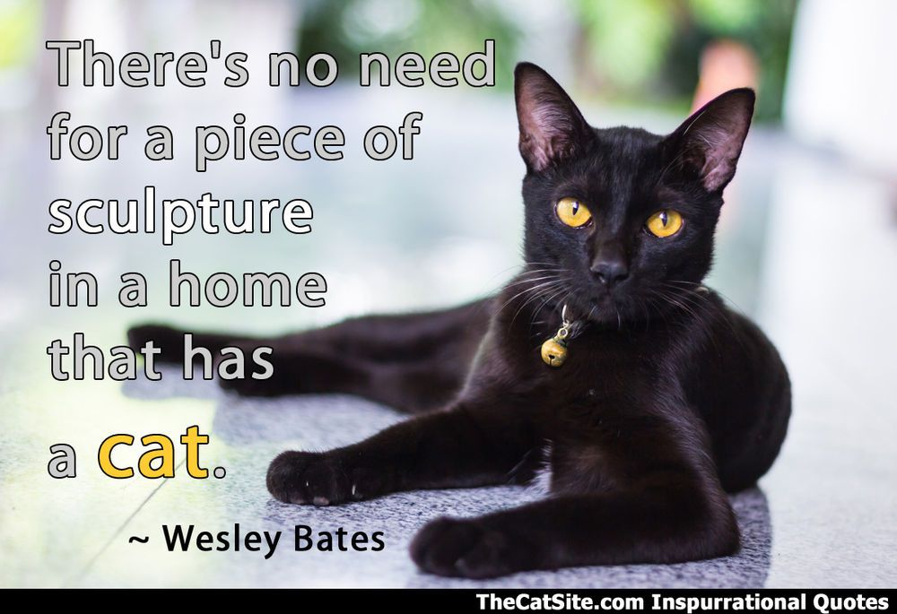 An Inspurrational Quote About The Beauty Of Cats Black Cat Breeds Cat Facts Names For Black Cats