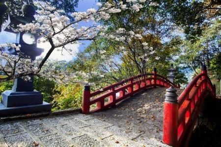 Sakura hermoso en el templo Foto de archivo