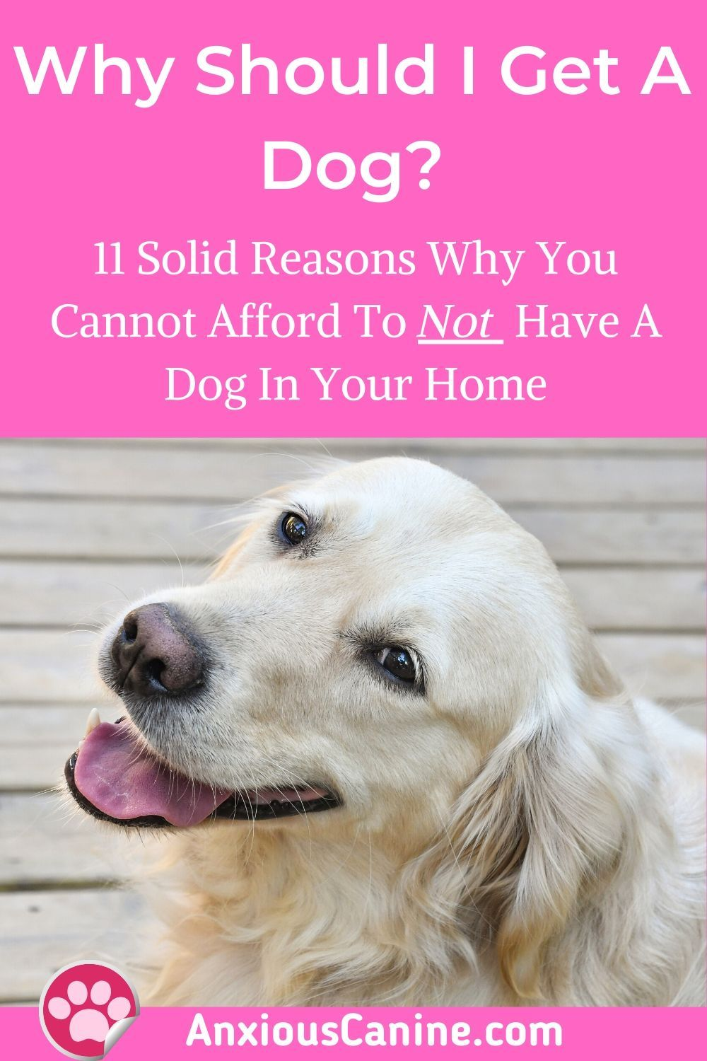Why should i get a dog 11 nononsense reasons to get one