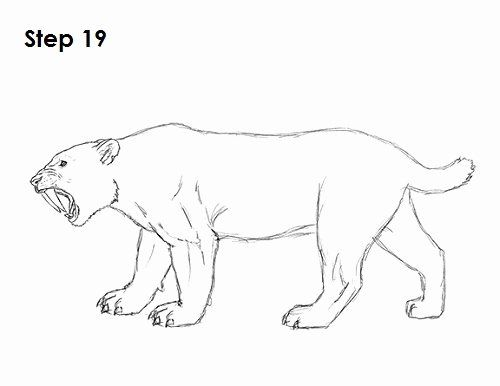 Saber Tooth Tiger Coloring Page Elegant Smilodon Pages Coloring