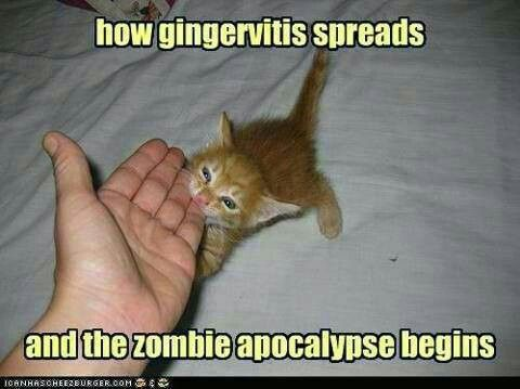 Gingervitis animals ) Pinterest Animal