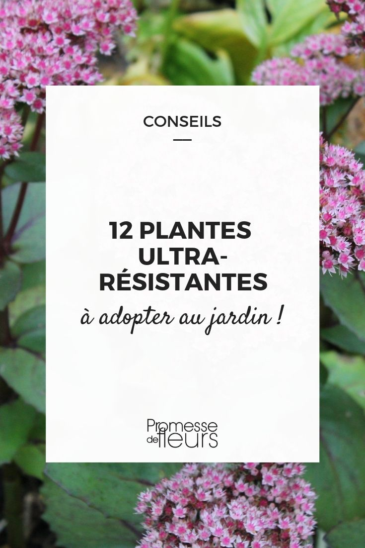 12 plantes ultra résistantes à adopter au jardin